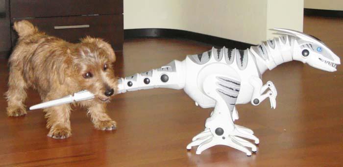 О породе терьер описания и фото собак